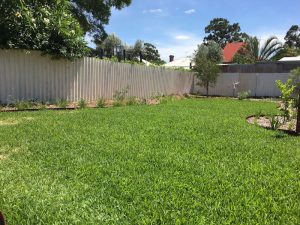 newly installed lawn in perth backyard design