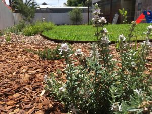 Perth native garden plants