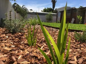 Native garden - Perth Landscaping